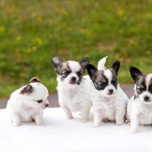 今日のマヤ暦「思いやりのある言葉をかけましょう」KIN250 白い犬・黄色い星・音3