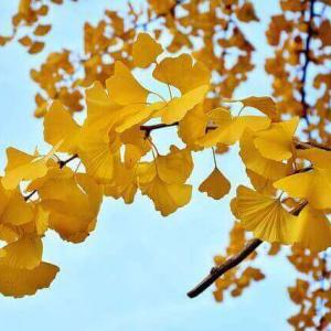 今日のマヤ暦「チャンスが来たら大胆に行動しましょう」KIN256 黄色い戦士・黄色い星・音9