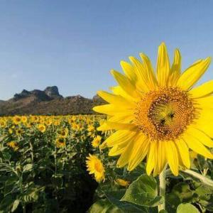 今日のマヤ暦「感謝して締めくくりましょう」KIN260 黄色い太陽・黄色い星・音13