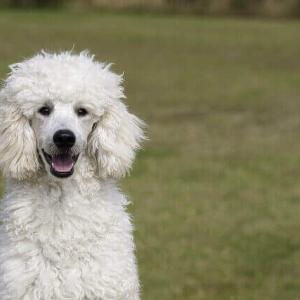 今日のマヤ暦「考えるより動きましょう」KIN10 白い犬・赤い龍・音10