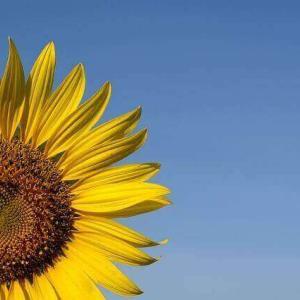 今日のマヤ暦「好きなことに集中しましょう」KIN20 黄色い太陽・白い魔法使い・音7