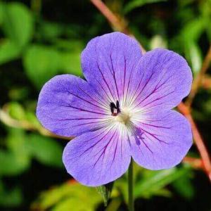 今日のマヤ暦「ハッキリとした夢や目標を持ちましょう」KIN23 青い夜・白い魔法使い・音10
