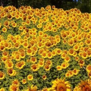 今日のマヤ暦「あるものに目を向けましょう」KIN40 黄色い太陽・黄色い太陽・音1