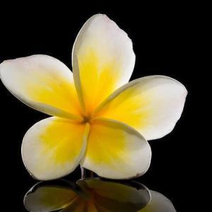 今日のマヤ暦「迷ったらやってみましょう」KIN42 白い風・黄色い太陽・音3 & 来週のポイント