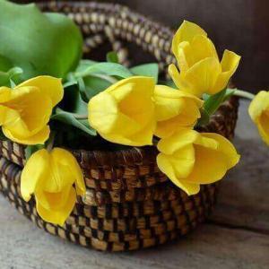 今日のマヤ暦「心に栄養を与えましょう」KIN48 黄色い星・黄色い太陽・音9