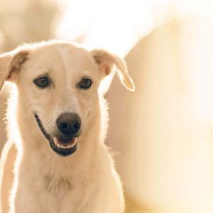 今日のマヤ暦「嗅覚を大切にしましょう」KIN50 白い犬・黄色い太陽・音11