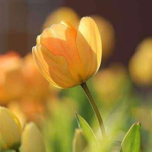 今日のマヤ暦「道理を貫きましょう」KIN52 黄色い人・黄色い太陽・音13