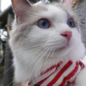 猫と旅行行こう♫