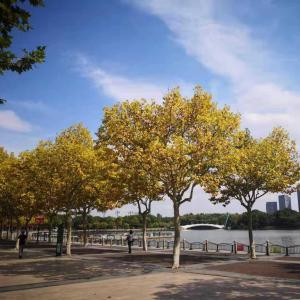 上海の秋の色