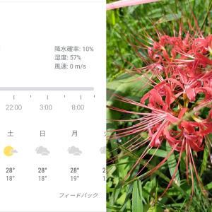 09月23日(木)おはモニ(^ε^)-☆Chu!!