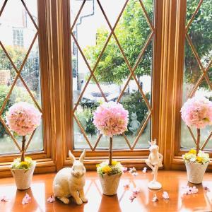 桜のトピアリーでお家見桜