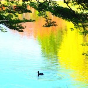 秋色の水面にて