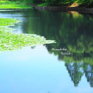 寂しき初夏の水面