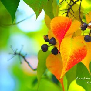 秋の色づき