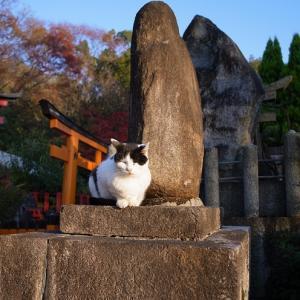 外国人、日本人から見た日本の不思議のあれこれ。
