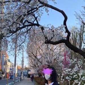 桜は満開♫