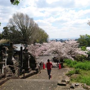 満開の桜の下での花見ランと増えたランナーたち~今日はヘアカットの日