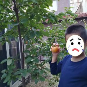 干し柿作りに挑戦