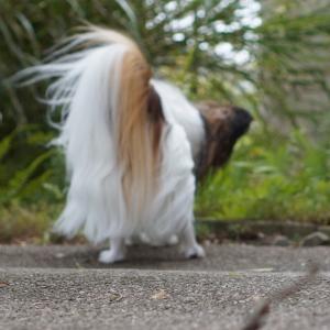 台風19号の風が怖い