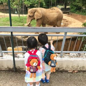 副鼻腔炎と動物園
