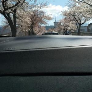 桜が満開なのに…。