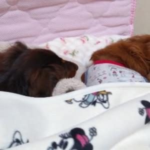 姉妹で暖かくして寝んねしてる~