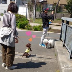 モカちゃん元気にお散歩 ②