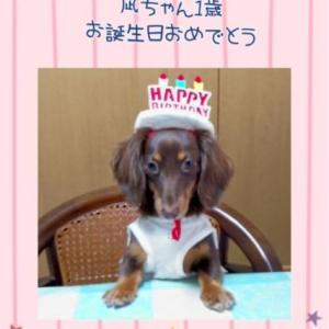 凪ちゃん1歳 おめでとう
