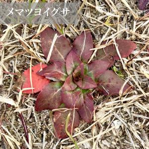 冬の植物は特に名前がわからない。