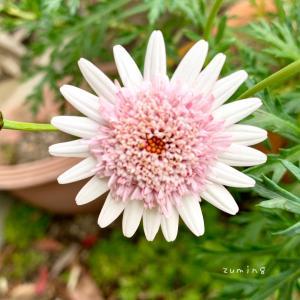 小さな花が集まって1つの花に。
