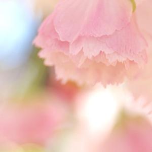 定期Web写真展(春)'20 特別編