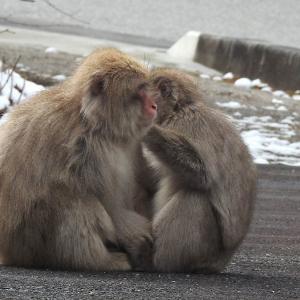ご機嫌の共有  猿群