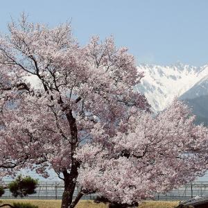 春は四月は 発見の喜び   四月六日