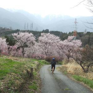 吉瀬の山畑    三月三十日