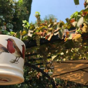 葡萄もレーズンになった夏の庭
