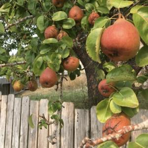 林檎の夢が叶った