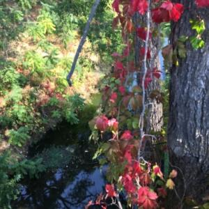 小川沿いの秋