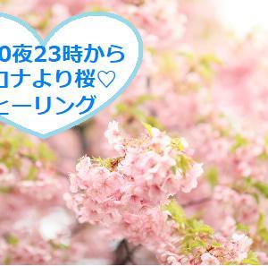 コロナより桜ヒーリングのメッセージをお届けします