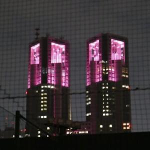 都庁が今年もピンクに!