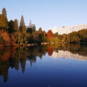 今朝の井の頭公園の紅葉