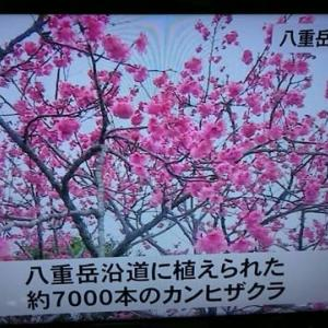日本一はやい桜祭り