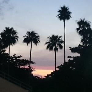 南国の夕陽