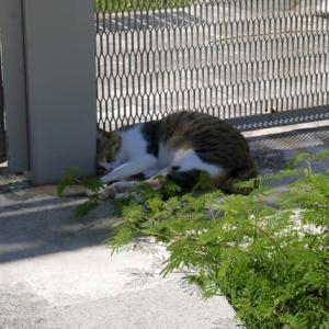 猫が日陰に