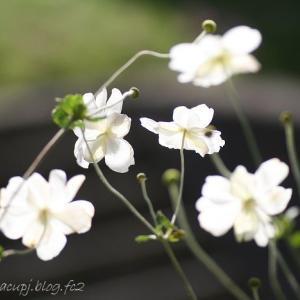 花のいのちはみじかくて・・・・