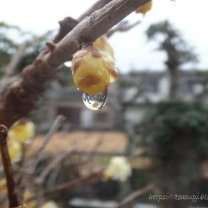 春雨のあとの枝に光る♪