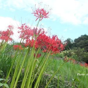 「置かれた場所で咲きなさい」渡辺 和子・・・と言われたって