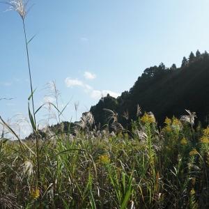 秋の夕日に照る山~♬