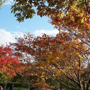 晩秋の日本庭園@昭和記念公園(その10)