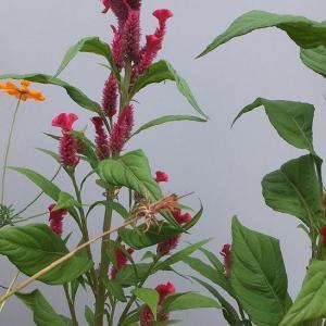 秋の植物図