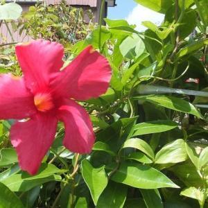 見たことのない情熱的な花に遭遇!